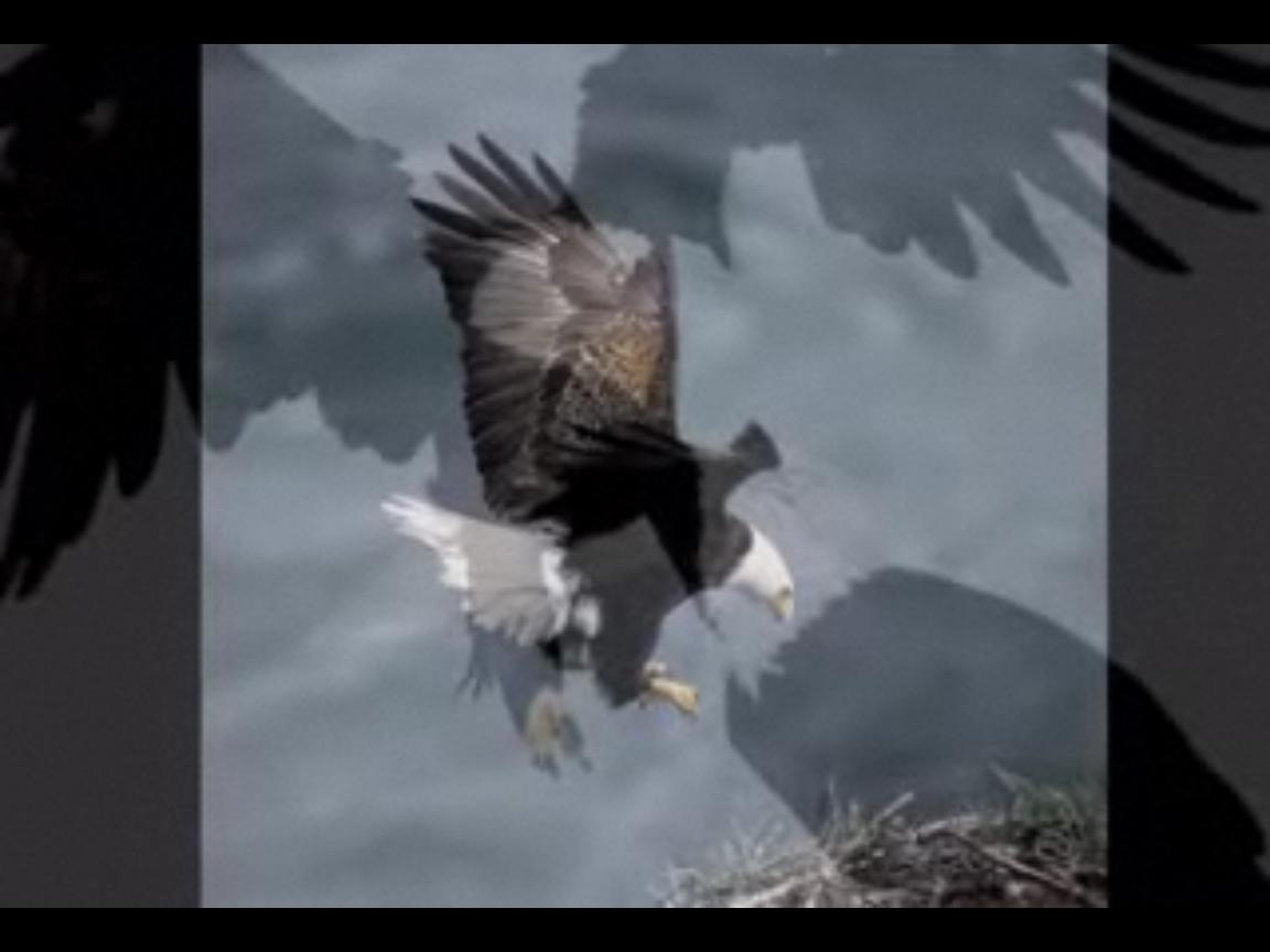γαμημένο τέρας πουλίμαύρο έφηβος πορνό βίντεο λήψη